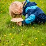 Kleiner Mykologe