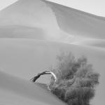 Fotobeitrag von Basim Ghomorlou