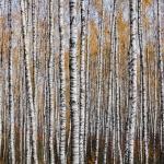 Fotobeitrag von Mikhail Kapychka