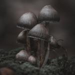 Fotobeitrag von Dirk Beckmann